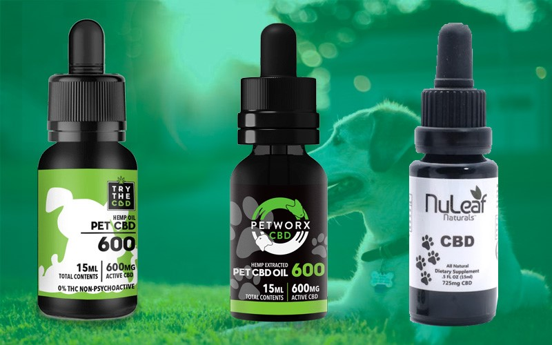 Exactly How To Discover Cbd Oil For Pet Dogs Amazon.com